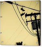 Telephone Pole 8 Acrylic Print