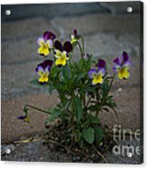 Tenacity Comes In Small Packages Acrylic Print