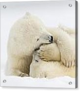 Tender Embrace Acrylic Print by Tim Grams