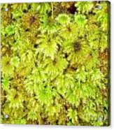 Tender Fresh Green Moss Background Texture Pattern Acrylic Print