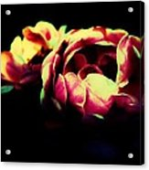 Tender Pink Acrylic Print