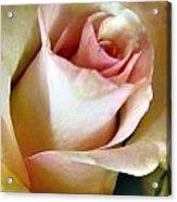 Tender Rose Bud Acrylic Print