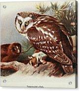 Tengmalms Owl Acrylic Print
