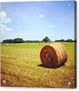 Tennessee Field Acrylic Print