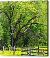 Tennessee Spring Acrylic Print