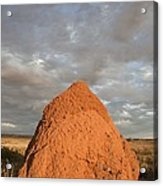 Termite Mound, Exmouth, Australia. Acrylic Print by Science Photo Library