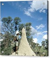 Termite Mound Acrylic Print by Mark Newman