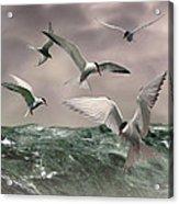 Terns Feasting At Sea Acrylic Print