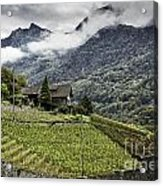 Terraced Vineyard Acrylic Print