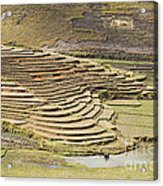 Terraces And Paddy Fields Acrylic Print