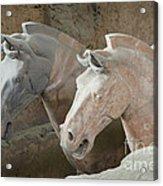 Terracotta Warrior Horses, China Acrylic Print