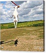 Terrier Ball Ballet Acrylic Print