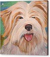 Terrier Portrait Acrylic Print