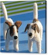 Terriers Acrylic Print
