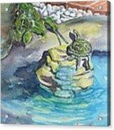 Terrific Turtle Acrylic Print