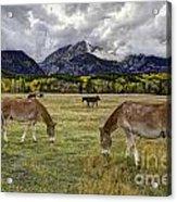 Teton Pastorale Acrylic Print