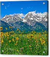 Teton Peaks And Flowers Acrylic Print