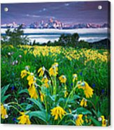 Teton Spring Wildflowers Acrylic Print by Jerry Patterson