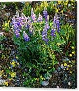 Teton Widflowers  Acrylic Print