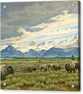 Tetons-buffalo  Acrylic Print