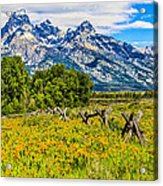 Tetons In The Spring Acrylic Print