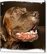 Tex The Dog Acrylic Print