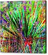 Texas Agave Pee Wee Plant Acrylic Print