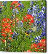 Texas Best Wildflowers Acrylic Print