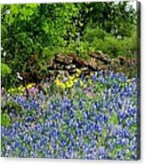 Texas Bluebonnets And Stone Wall Acrylic Print