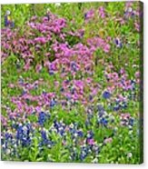 Texas Bluebonnets And Wildflowers Acrylic Print