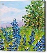 Texas Bluebonnets Acrylic Print