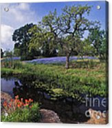 Texas Hill Country - Fs000056 Acrylic Print
