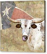 Texas Longhorn # 2 Acrylic Print