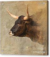 Texas Longhorn # 3 Acrylic Print