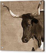 Texas Longhorn #6 Acrylic Print