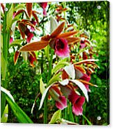 Texas Orchids Acrylic Print