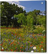 Texas Spring Spectacular Acrylic Print