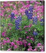 Texas Wildflowers 3 - Fs000930 Acrylic Print