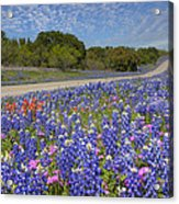 Texas Wildflowers Images - Bluebonnets 2 Acrylic Print