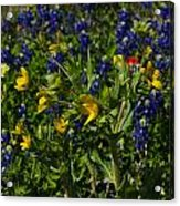 Texas Wildflowers Acrylic Print by Kelly Kitchens