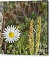 Texas Wildflowers V5 Acrylic Print