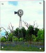 Texas Windmill And Bluebonnets Acrylic Print