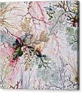 Textile Design Acrylic Print