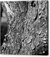 Texture In The Trees Acrylic Print