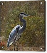 Textured Blue Heron Acrylic Print