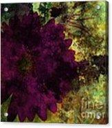 Textured Flora Acrylic Print by Ankeeta Bansal