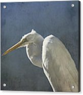 Textured Great Egret Acrylic Print
