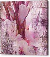 Textured Pink Gladiolas Acrylic Print