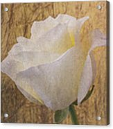 Textured Rose Acrylic Print