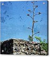 Textured Ruins Acrylic Print
